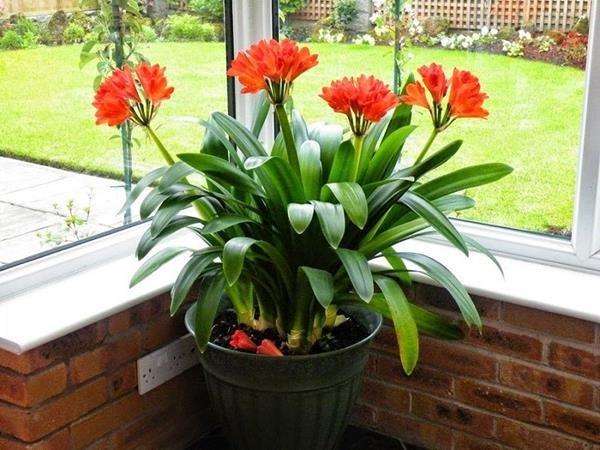 hoa lan quân tử là loài hoa không cần ánh nắng