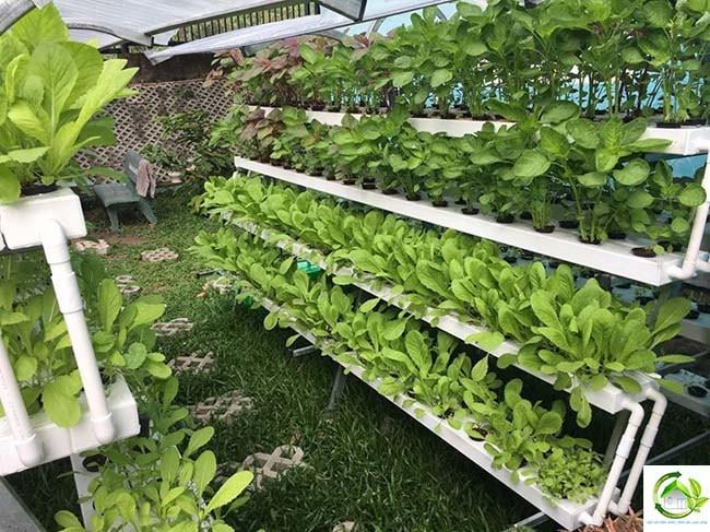 trồng rau sạch thông minh