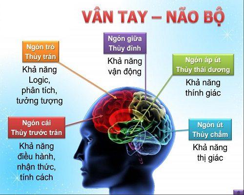 vân tay và não bộ