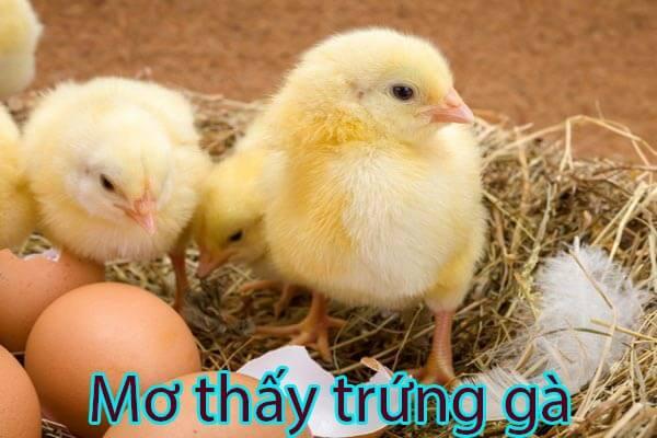 mở thấy trứng gà